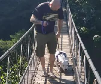 【動物】揺れる吊橋を怖がる犬