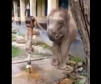 【動物】ゾウが井戸の水を手押しポンプで汲み上げて飲む