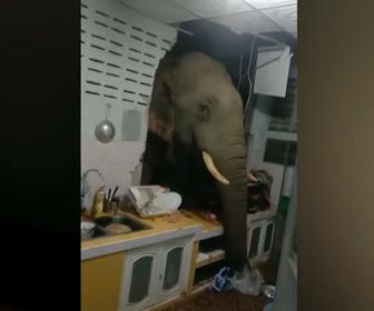 【動物】空腹のゾウがキッチンの壁を壊し米を盗む衝撃映像