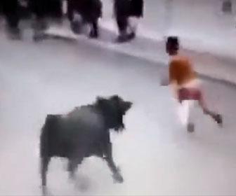 【動物】追いかけてくる暴れ牛から男性が必死に逃げるが…
