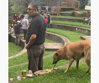 【動物】バンドの演奏を聴いている男性からピザを盗む犬