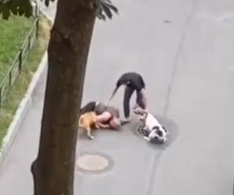 【動物】2匹のピットブルが男性を攻撃。飼い主が必死に止める衝撃映像