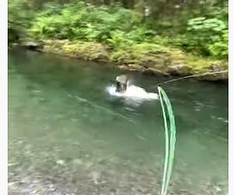 【動画】川で魚を釣り上げようとするがワシに魚を横取りされてしまう