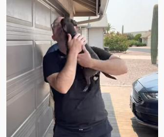 【動画】4日ぶりに飼い主に会い大喜びする犬が可愛い