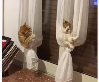 【動画】カーテンハンモックが大好きな猫達