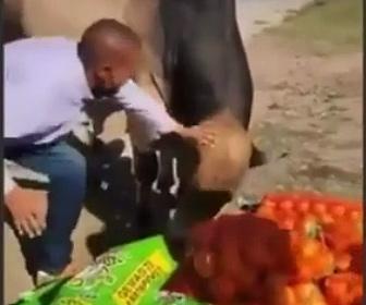 【動画】必死に止めるが果物を牛に取られてしまう