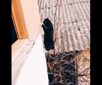【動画】ミッションインポッシブル - 猫バージョン