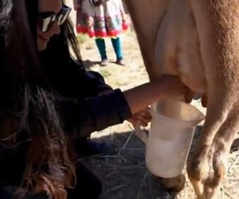 【動画】女性が牛の乳しぼり体験するが…衝撃の結末