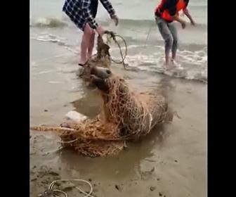 【動画】漁師の網に引っかかったアシカを救出しようとするが…