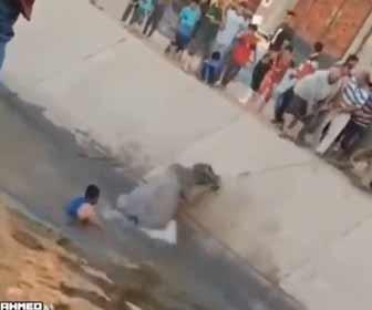 【動画】川に落ちた水牛を大勢で引っ張り救出するが…