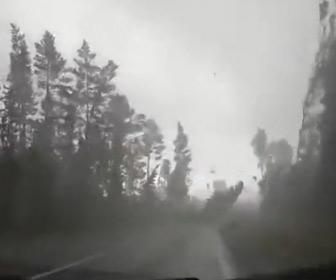 【動画】ハリケーンの中、森を走る車。突風で木が倒れていく映像が凄い
