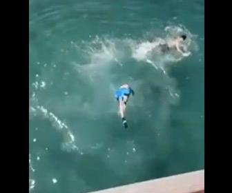 【動画】少年が橋から海に飛び込んだ直後に船が通過