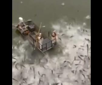 【動画】外来魚を電気ショック漁で一網打尽