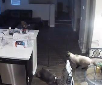 【動画】キッチンの流し台にジャンプしたネコが…