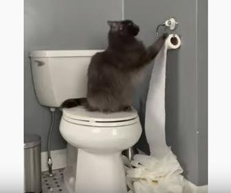 【動画】ネコがトイレでイタズラ。トイレットペーパーを出しまくってしまう。