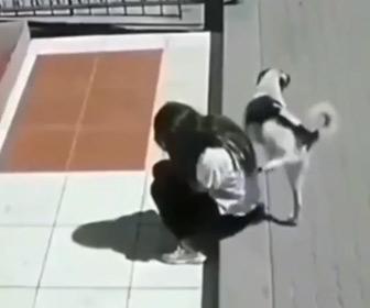 【動画】座っている少女に犬がオシッコをかけてしまう