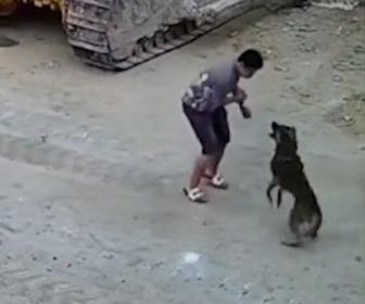 【動画】男性に野良犬が飛びかかり噛みつこうとするが…