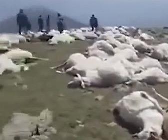 【動画】アメリカ、ジョージア州で落雷により500頭以上の羊が死亡してしまう