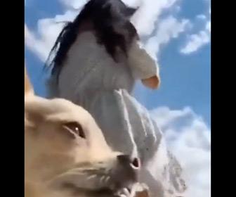 【動画】風で少女のスカートがめくれるが…犬が邪魔すぎる