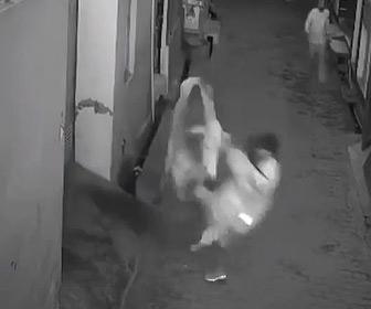 【動画】野良牛が女性に襲いかかり、助けに入った少年もはね飛ばされてしまう