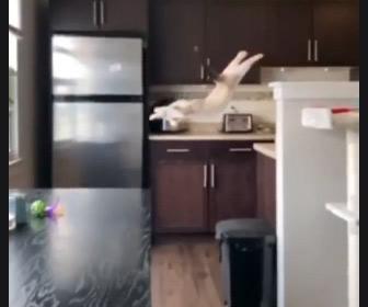 【動画】子猫がテーブルにジャンプするが失敗