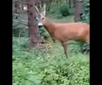 【動画】森の中で近づいてくるシカに男性がキノコをあげようとするが…