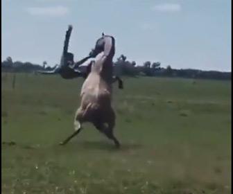 【動画】暴れ馬に乗る男性。振り落とされたと思ったら…