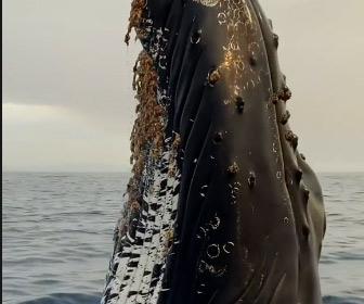 【動画】ボートの目の前に巨大なザトウクジラが現れる衝撃映像