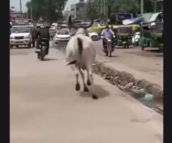 【動画】バイクが牛とすれ違うが猛スピードで牛がバイクを追いかけてくる衝撃映像