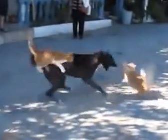 【動画】犬VS4匹の猫 猫達が犬に襲いかかる衝撃映像