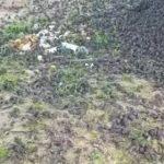 【動画】バリ島で何百羽のスズメが突然死亡してしまう衝撃映像