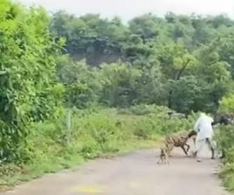 【動画】道を歩く老人にハイエナが襲いかかる衝撃映像
