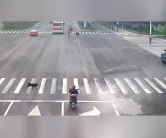 【動画】横断歩道を走って渡る犬がバイクに突っ込んでしまう事故映像