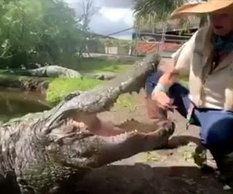 【動画】巨大なワニに近づき餌をあげる金髪女性が凄い
