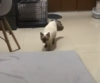 【動画】ネコが生きたまま捕まえてベッドの上に持ってきた生き物が…
