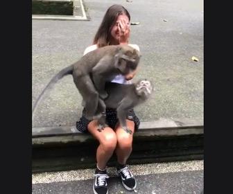 【動画】若い女性の膝の上で2匹のサルが交尾と始めてしまう