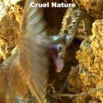 【動画】岩に擬態したヘビが飛んできた鳥に襲いかかる