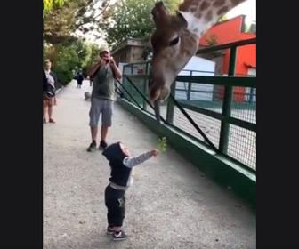 【動画】キリンに食べ物をあげようとする少年が可愛い