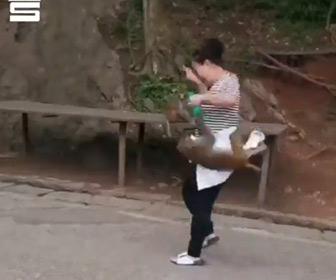 【動画】道を歩く女性にサルが飛びかかってくる衝撃映像