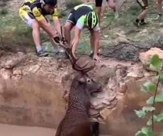 【動画】水路に落ちたシカをサイクリストのグループが必死に助け出す