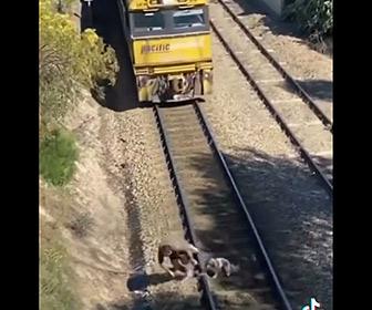 【動画】猛スピードの電車が迫る中、線路に繋がれている犬を助け出す男性が凄い