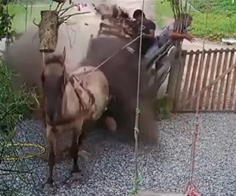 【動画】男性2人が乗った馬車が暴走、柵に突っ込む衝撃映像