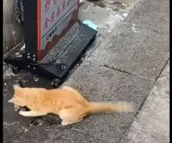 【動画】ネコの狩猟能力が凄すぎる。看板の下から猛スピードで逃げるネズミを一瞬で捕まえる衝撃映像
