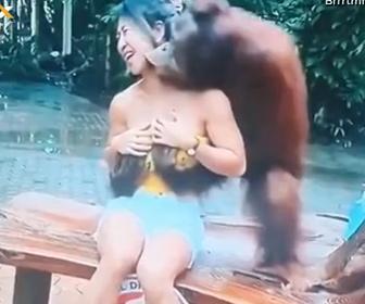 【動画】記念撮影をする女性がオラウータンに胸をもまれキスをされまくる