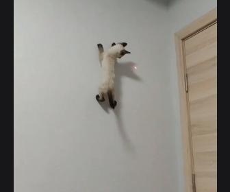 【動画】レーザーポインターを追いかけて壁を登る子猫