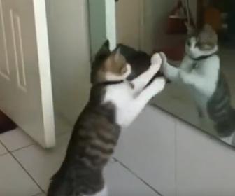【動画】鏡を見たネコの反応が可愛い