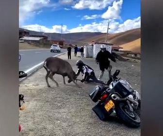 【動画】バイクライダー VS 鹿